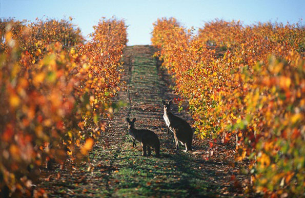 The best Margaret River wineries - Myaree Car Hire