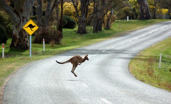 kangaroo_road